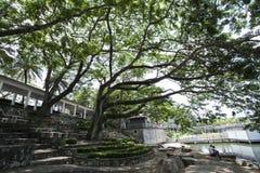 Grands arbre et ciel Images libres de droits