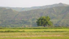 Grands arbre et montagne image stock