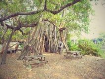 Grands arbres Images libres de droits