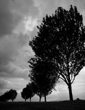 Grands arbres Photo stock