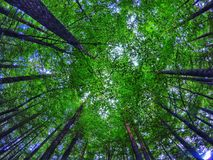 Grands arbres photos stock