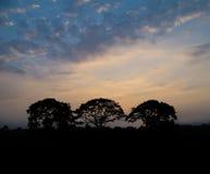 3 grands arbres au coucher du soleil Photographie stock libre de droits