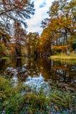 Grands arbres de Cypress avec la couleur renversante d'automne photo libre de droits