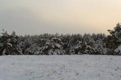 Grands arbres de Noël de conte de fées Photo libre de droits