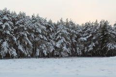 Grands arbres de Noël de conte de fées Photos libres de droits