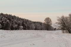 Grands arbres de Noël de conte de fées Images stock