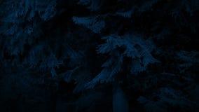 Grands arbres en brise douce la nuit banque de vidéos