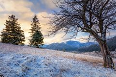 Grands arbres et chaîne de montagne neigeux, paysage d'hiver photo libre de droits