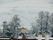 Grands arbres et maisons neigeux Images stock