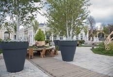 Grands arbres mis en pot à Nancy, place centrale de Frances image libre de droits
