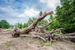 Grands arbres morts Photographie stock libre de droits