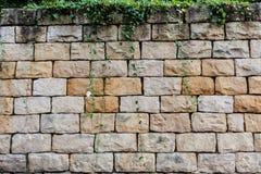 Grands briques et fond de végétation Photos stock