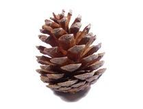 Grands cônes naturels de pin d'isolement sur le fond blanc Images stock
