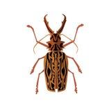 Grands cerfs communs de scarabée avec des klaxons Image libre de droits