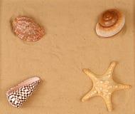 Grands coquillages sur le sable image stock