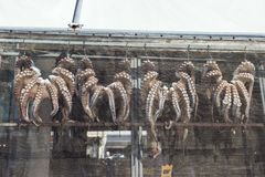 Grands, fraîchement pêchés poulpes, suspendus dans l'étalage du côté ensoleillé de la taverne photos libres de droits