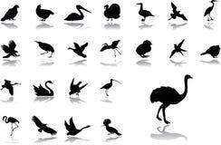 Grands graphismes de positionnement - 18. Oiseaux illustration stock