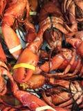 Grands homards bouillis rouges frais sur l'?talage d'un restaurant de poissons ? Bruxelles photographie stock libre de droits