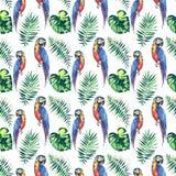 Grands les perroquets jaunes de belle jungle mignonne colorée lumineuse et bleus tropicaux avec les palmettes vertes modèlent l'i illustration libre de droits