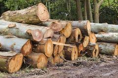 Grands logarithmes naturels d'arbre de coupure   Photos libres de droits