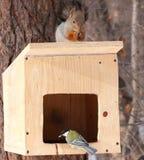 Grands mésange et écureuil Images stock
