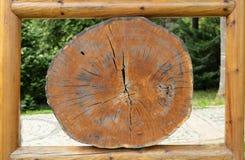 Grands morceaux circulaires de section transversale en bois avec l'anneau annuel photos libres de droits