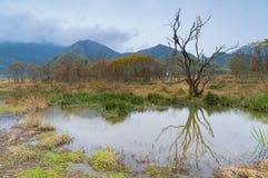 Grands neuf lacs de forêt de Hubei Shennongjia Photos libres de droits