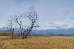 Grands neuf lacs de forêt de Hubei Shennongjia Image stock