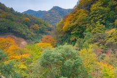 Grands neuf lacs de forêt de Hubei Shennongjia Images libres de droits