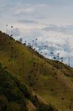 Grands palmiers sur la pente d'une colline verte dessous Photos stock