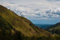 Grands palmiers sur la pente d'une colline verte dessous Photographie stock