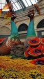 Grands paons jumeaux de fleur Photo libre de droits