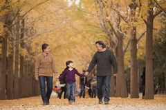 Grands-parents et petite-fille tenant des mains et marchant en parc en automne Photos libres de droits