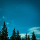 Grands pins sous le ciel nocturne bleu Images stock