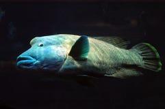 Grands poissons Photo libre de droits