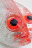 Grands poissons d'oeil Photo stock