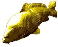 Grands poissons de carpe sur le fond blanc Photo stock