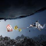 Grands poissons de crochet Photographie stock libre de droits