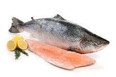 Grands poissons saumonés et un filet Photographie stock libre de droits