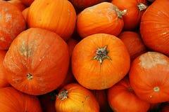 Grands potirons oranges et rouges Photographie stock libre de droits