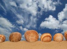 Grands seashells sur le sable photo stock