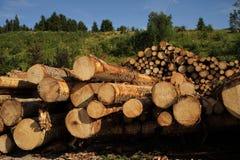 Grands troncs d'arbre photographie stock libre de droits