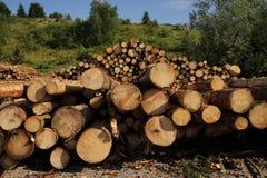 Grands troncs d'arbre photo stock