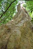 Grands troncs d'arbre dans une forêt Image stock
