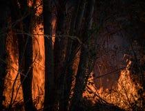 Grands usines et arbres de combustion de flammes dans un incendie de for?t image libre de droits