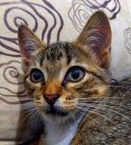 Grands yeux du chat Photos stock