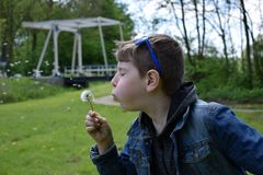 Grandson blowing Dandelion royalty free stock photography