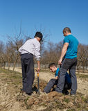 Grandson, father and grandfather planting a plum tree in an orchard stock photography