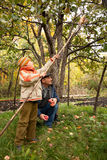 Grandson and grandfather gather apples. Autumn royalty free stock photography