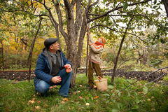 Grandson and grandfather neat apple tree Royalty Free Stock Photo
